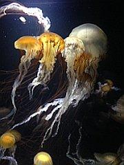 加茂水族館1
